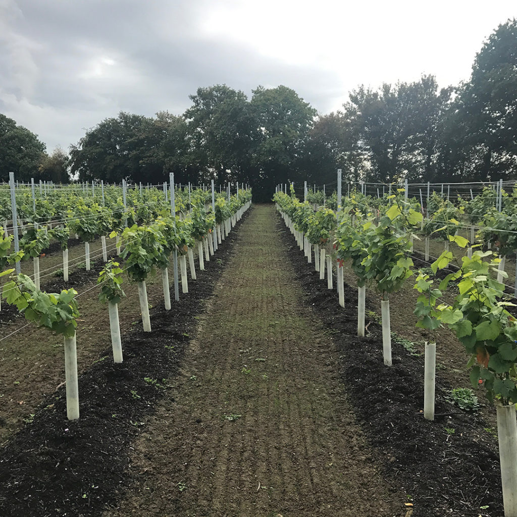 sj-barnes-vineyard-services-3