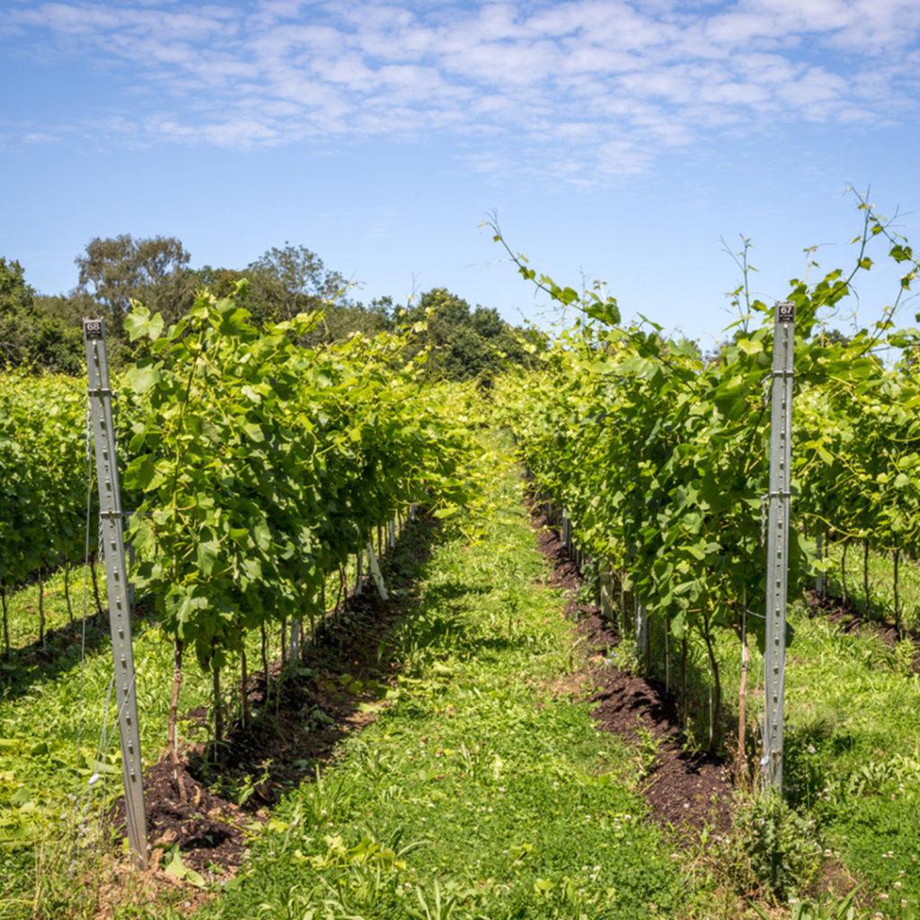 sj-barnes-vineyard-services-5