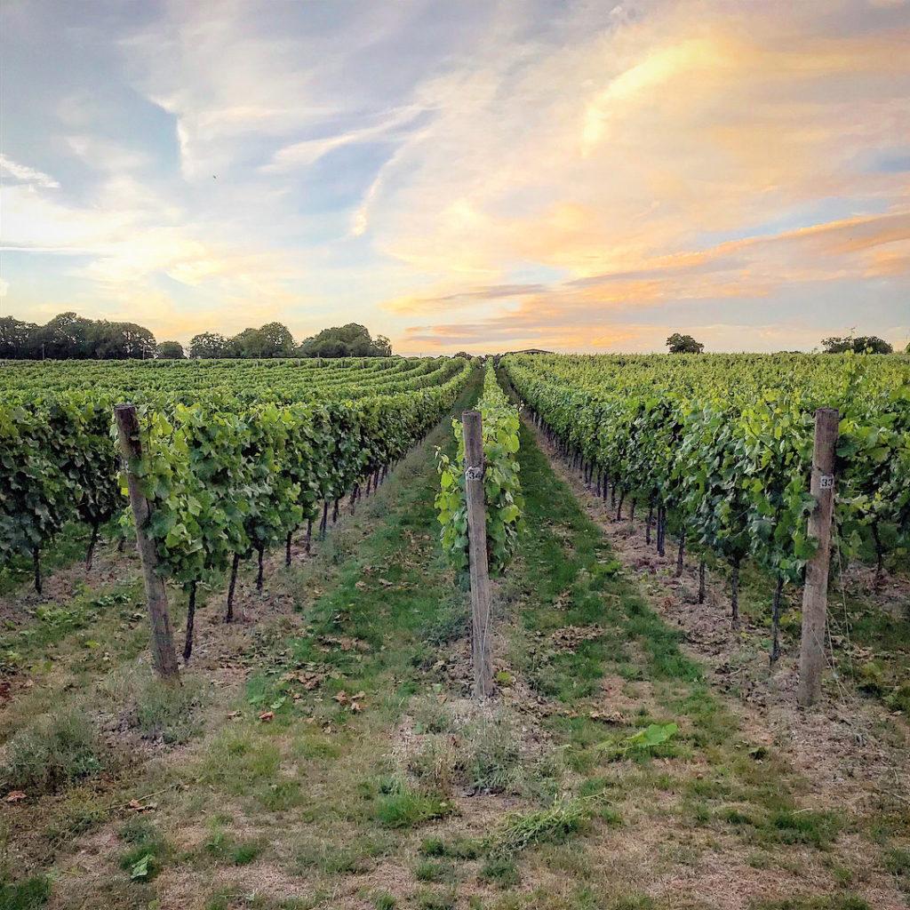 sj-barnes-vineyard-services-6
